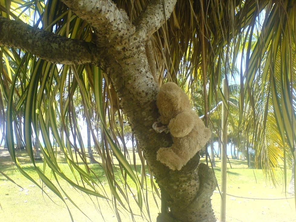 friedrich dans l'arbre 1