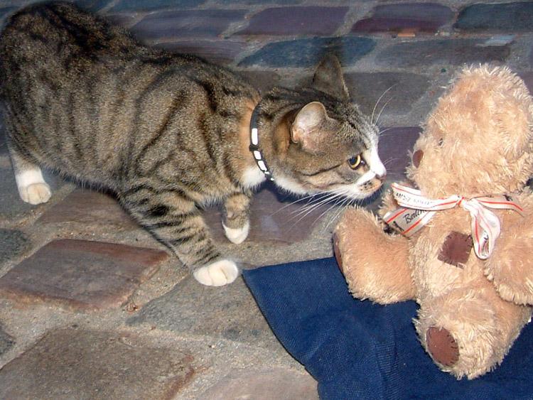 Friedrich et le chat