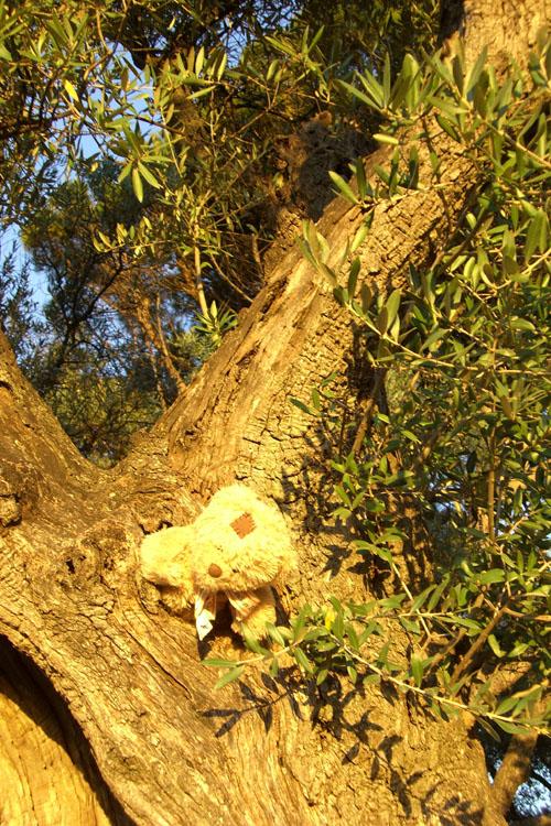 friedrich cherche du miel